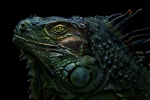 How to prepare for Godzilla's arrival